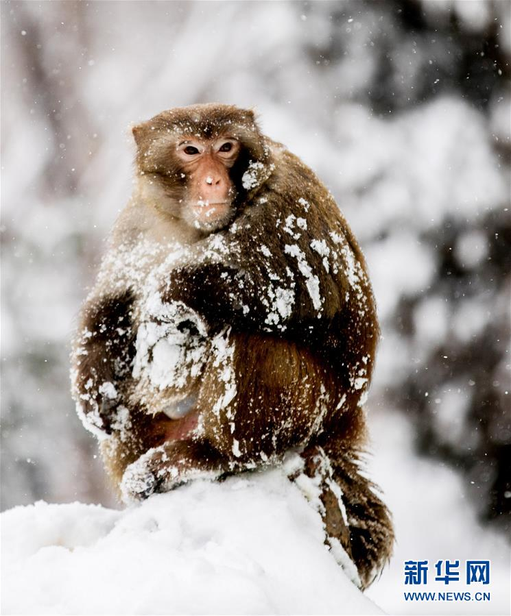 #(环境)(1)独立雪中
