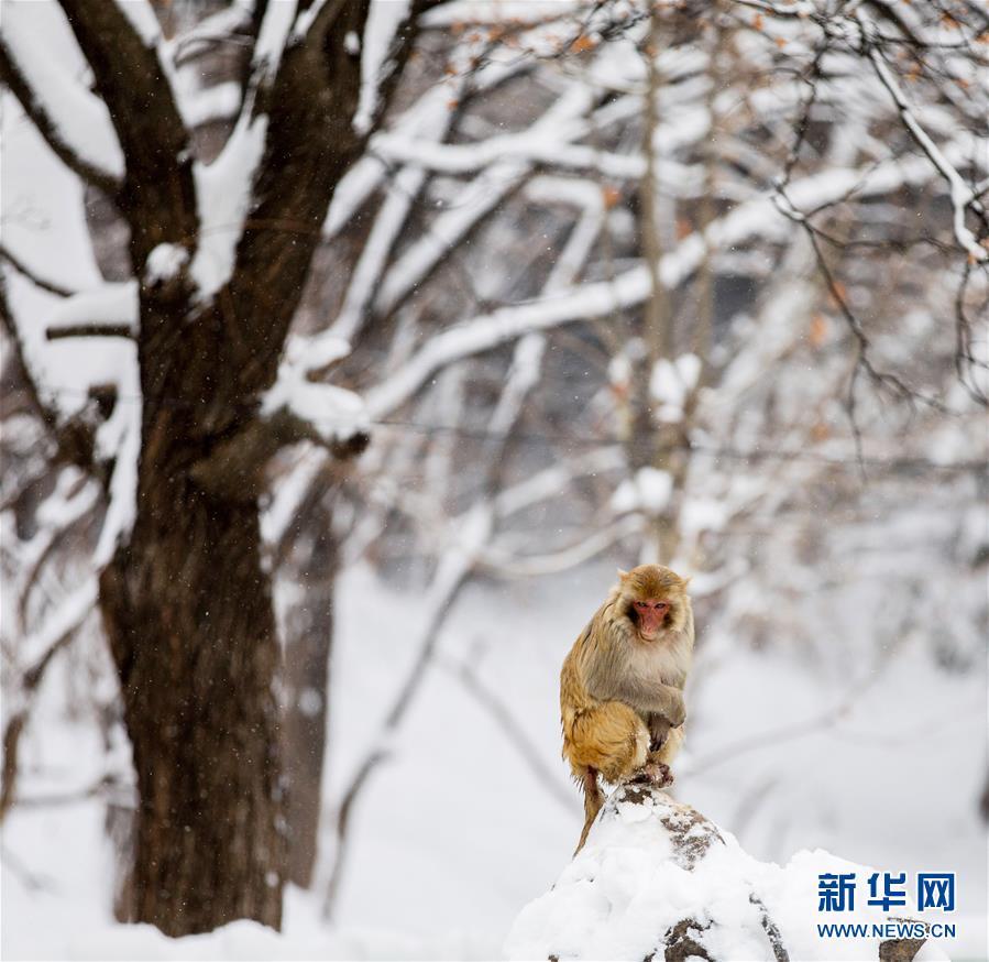 #(环境)(3)独立雪中