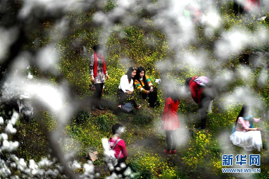 (新春走基层)(2)广西融安:鲜花盛开引客来