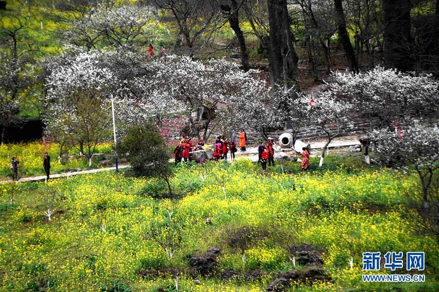 (新春走基层)(3)广西融安:鲜花盛开引客来