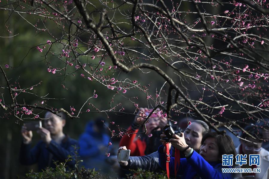 (社会)(2)杭州:灵峰探梅赏春时