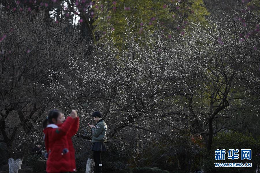 (社会)(3)杭州:灵峰探梅赏春时