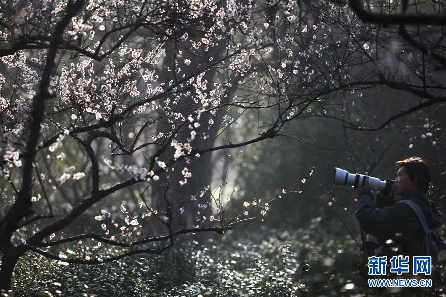 #(社会)(2)江苏南京:梅花绽放引客来