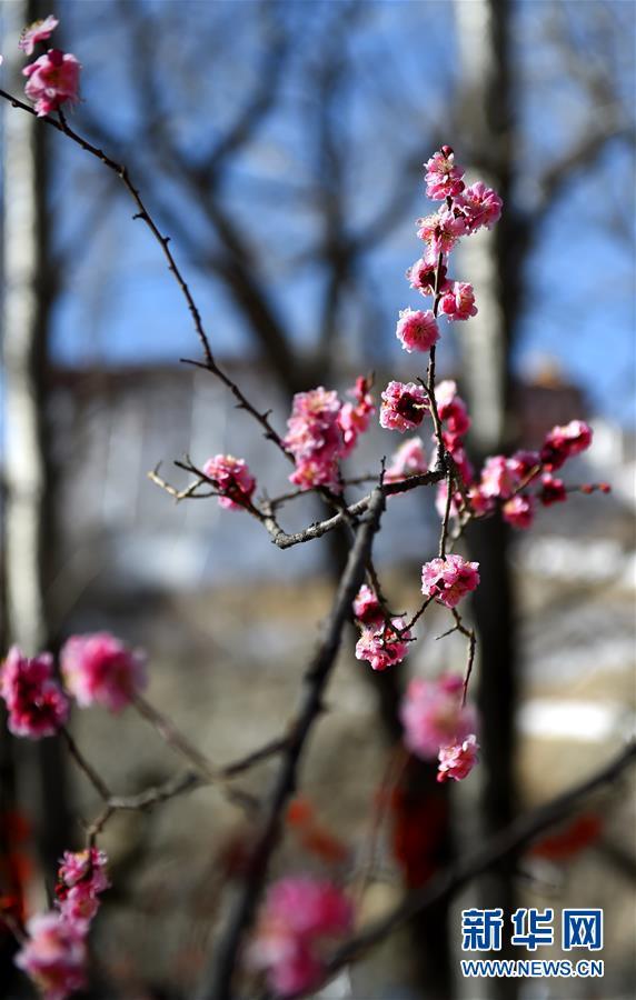 (社会)(3)春到拉萨
