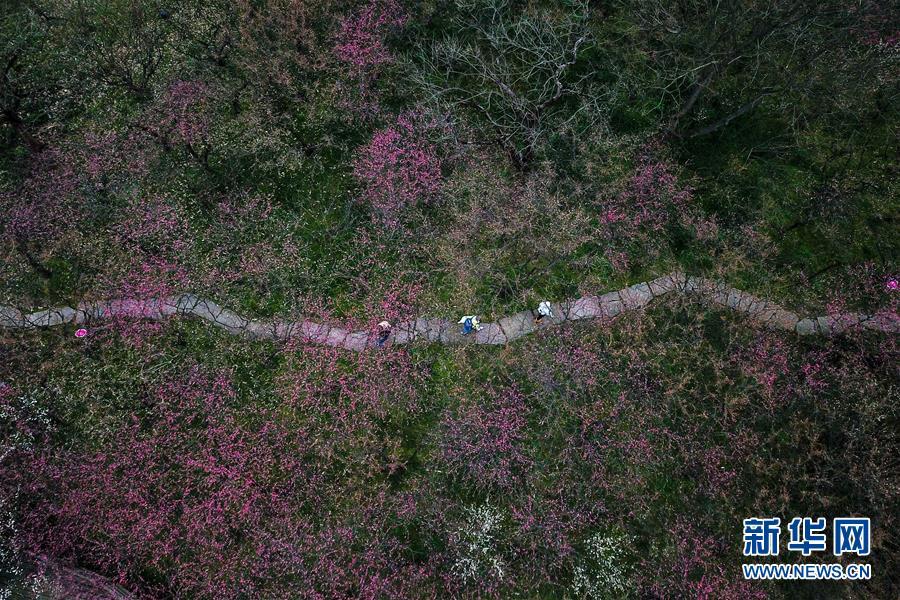 (美丽中国)(1)杭州西溪湿地:曲水寻梅 美不胜收