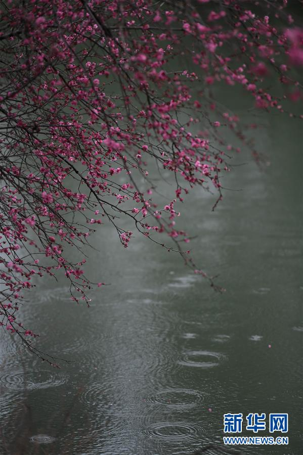 (美丽中国)(4)杭州西溪湿地:曲水寻梅 美不胜收