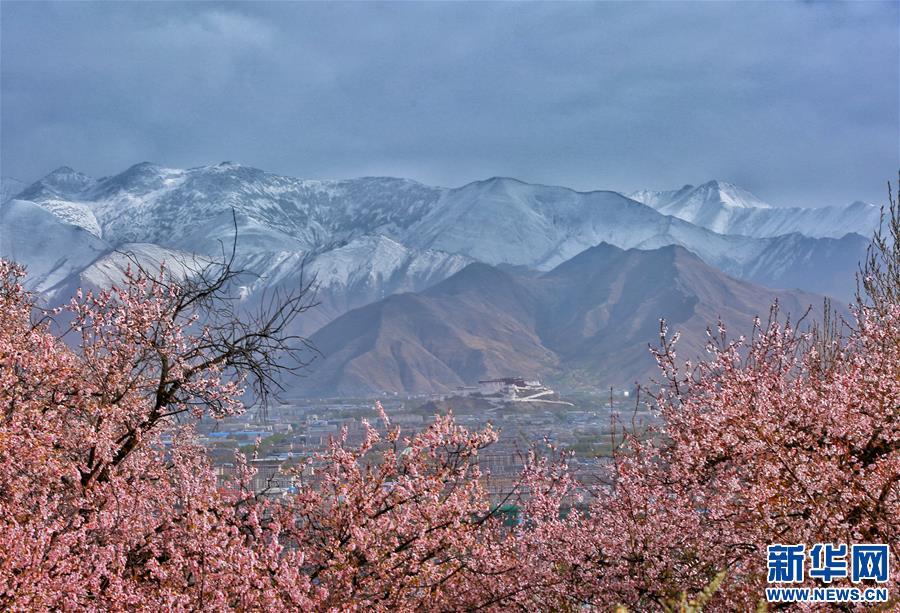 (环境)(2)春满高原