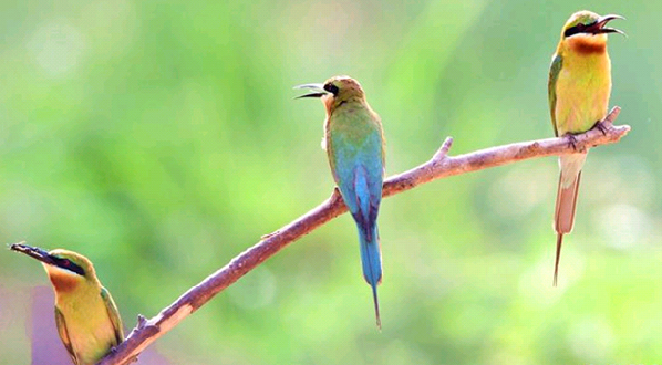 小鸟叼树枝简笔画彩色